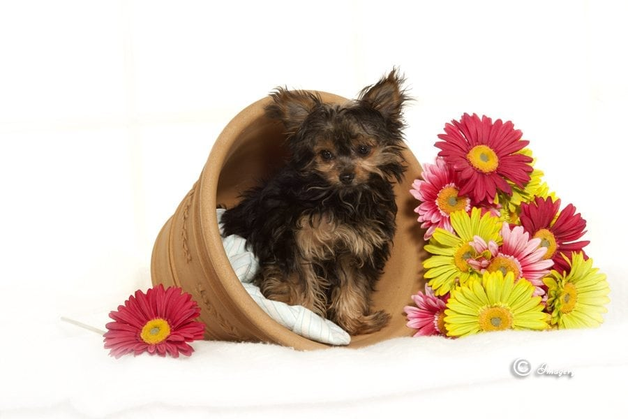 Professional Photo of Small Dog in Flower Pot