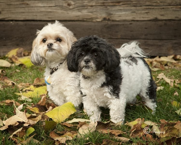 Professional Photo of Two Dogs