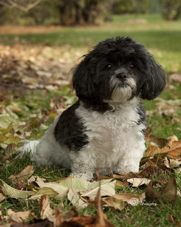 Professional Photo of Dog in Leaves on Grass